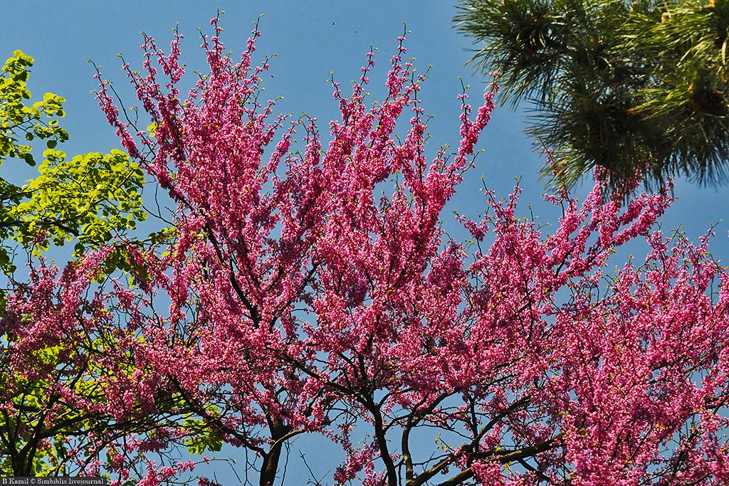 Весна на Северном Кавказе