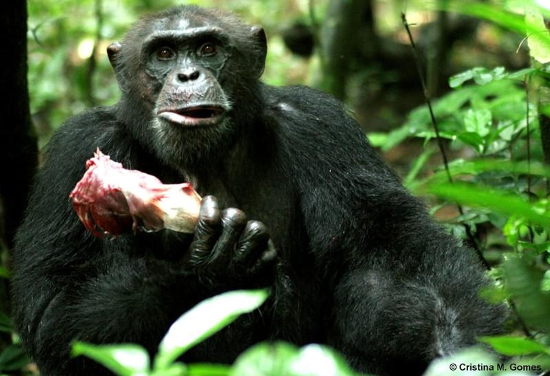 Благодаря вегетарианству человек обретает просветление веганы, веганы и мясоеды, мифы, мясо