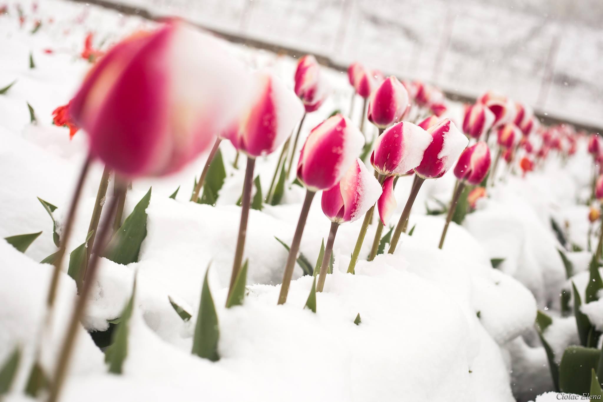 картинки тюльпаны в феврале делал отверстия каждые