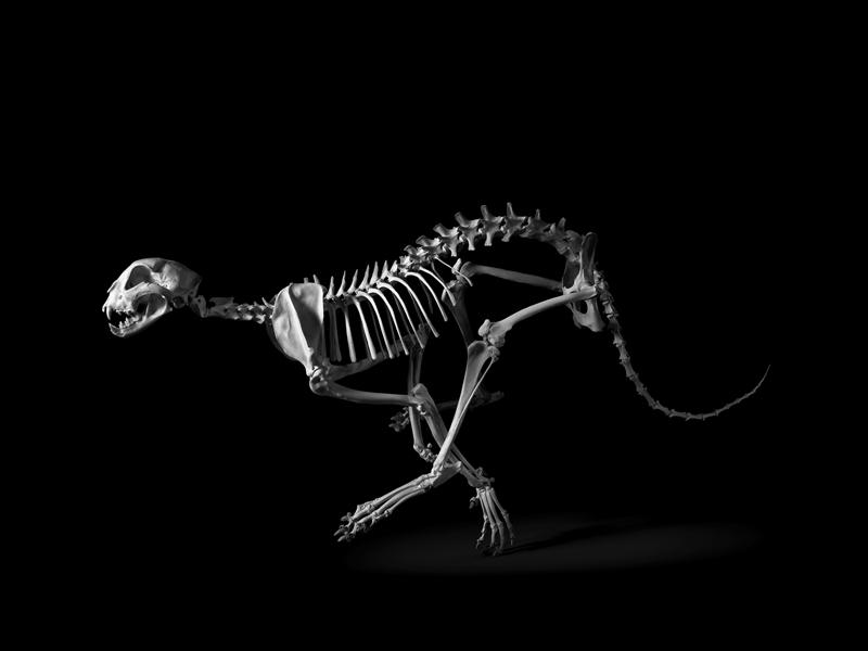 Cheetah © Patrick Gries