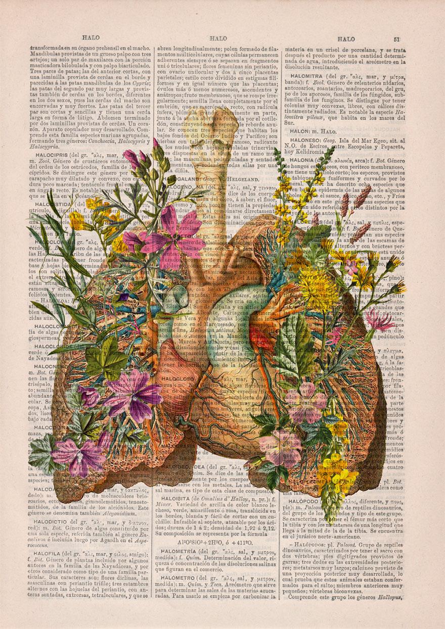 Ilustracoes florais dao vida a dicionarios que seriam descartados