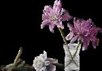 colacao_trans-flores.png