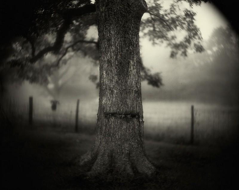 Душа и тело американского Юга в работах Салли Манн