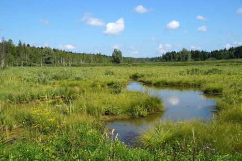 Пейзажи Западной Сибири