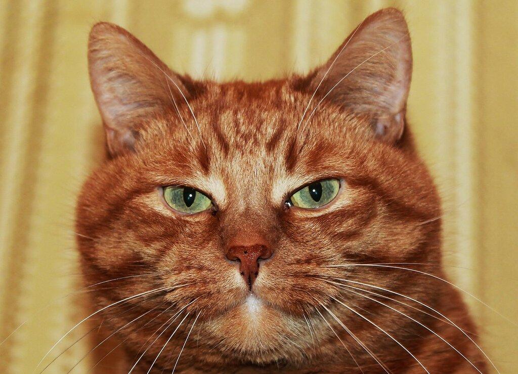 О чем думают коты..,,,.???