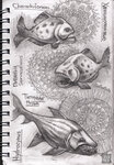 fishes-sketch.jpg