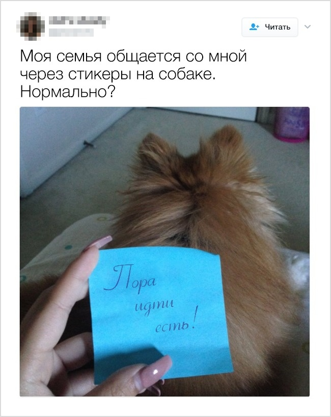 © twitter / pimpytrisho   4.