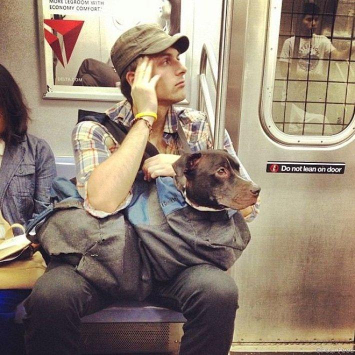 Как хитрые ньюйоркцы обходят запрет на провоз собак в метро