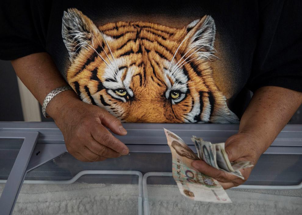 10. Ещё одно развлечение — кормежка тигров туристами из специального автобуса. (Фото Kevin Fray