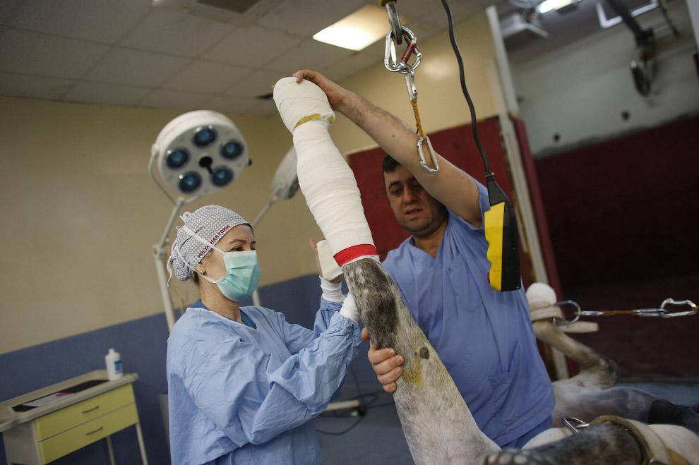 18. «Скоро ты поправишься». Лошадь со своим конюхом после операции в госпитале, Стамбул, 17 мар