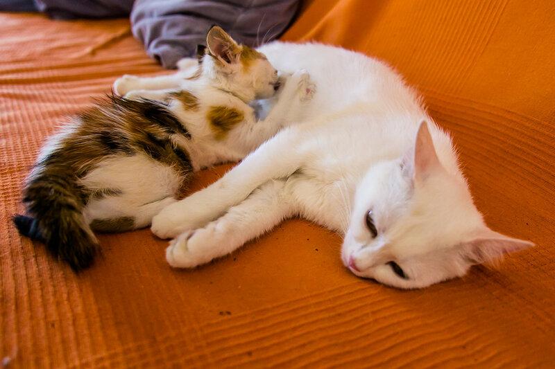 Кошачья мадонна с младенцем