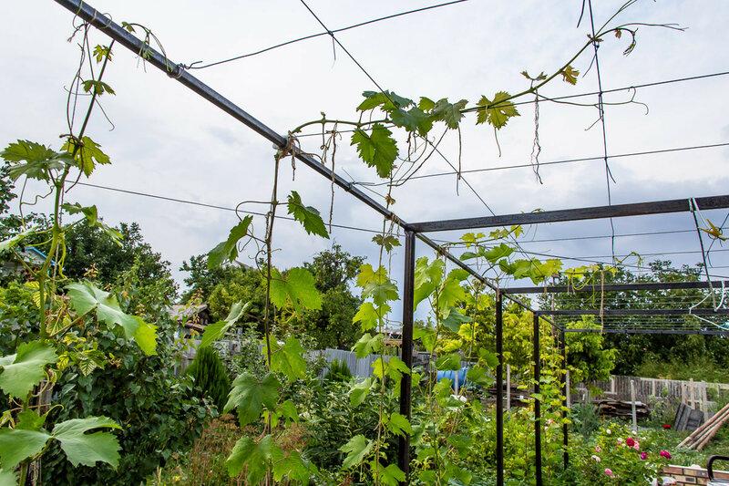 Виноградная беседка