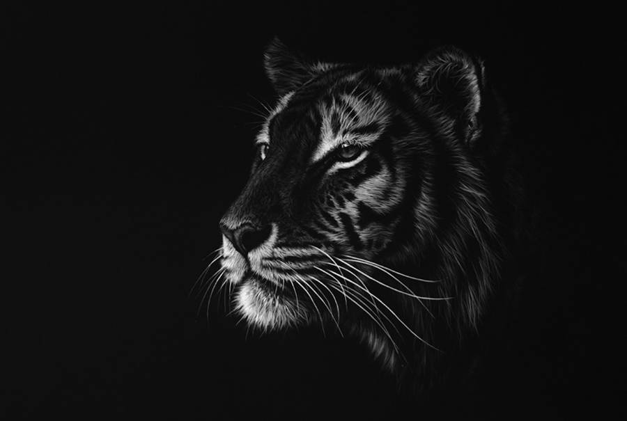 Stunning Realistic Wildlife White on Black Drawings (10 pics)