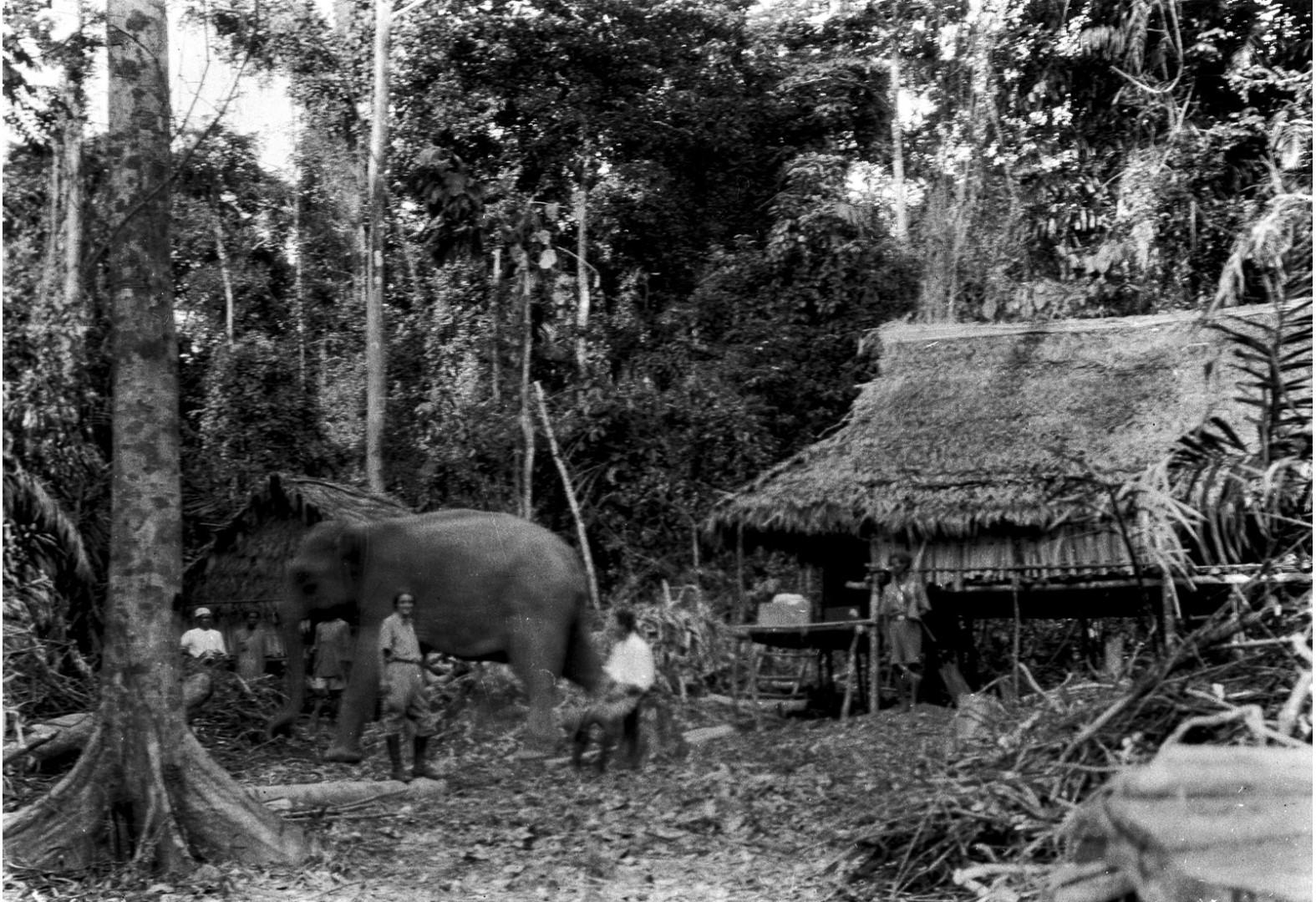 1147. Дом лесничих. Слон числится работником лесного хозяйства