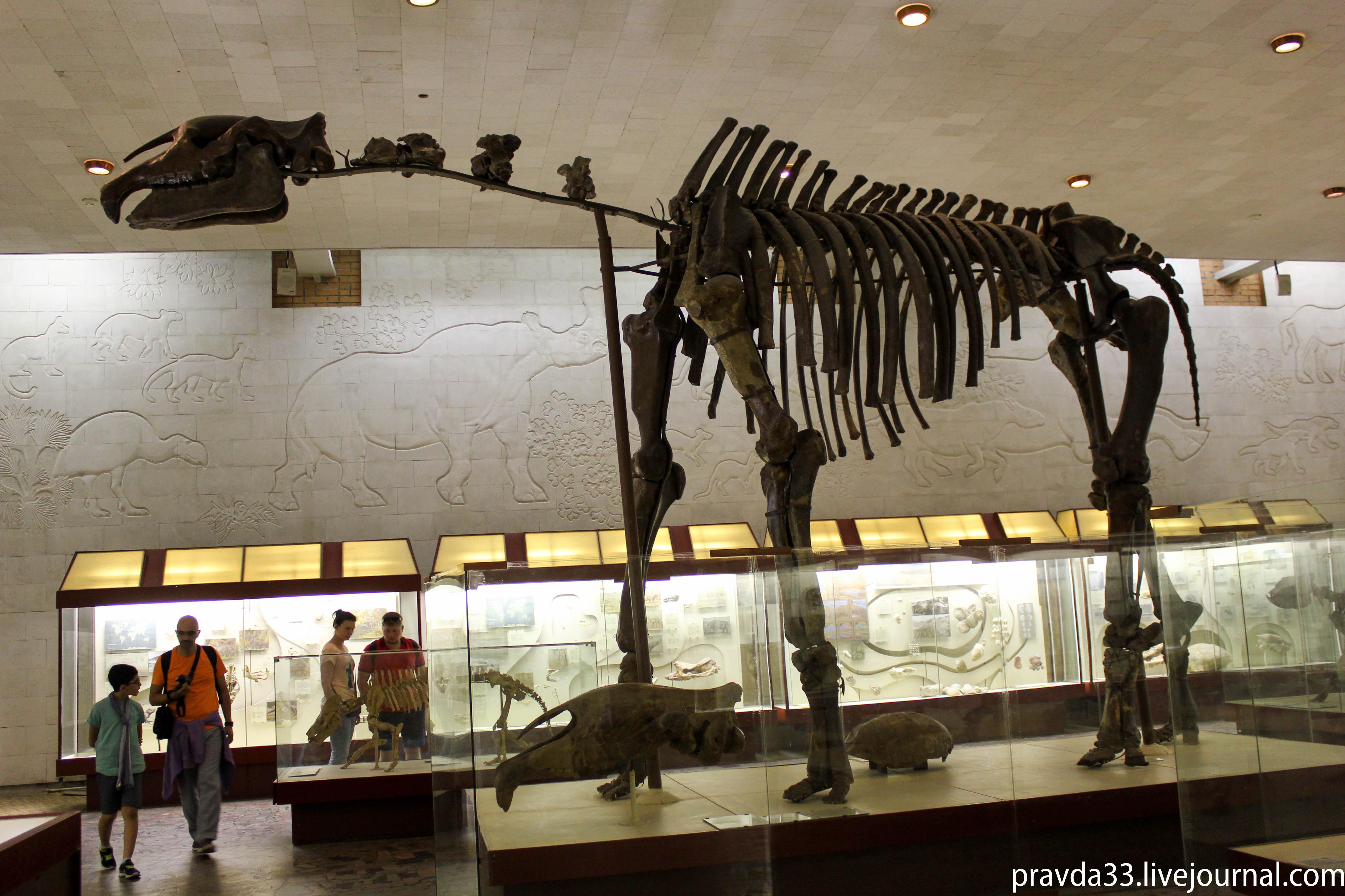 Музей палеонтологии-68.jpg