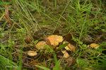 За грибами.