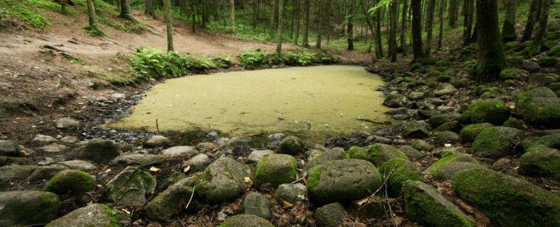 День уфолога! Феномен Покайнского леса