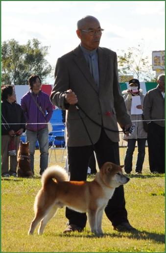 Daigorou Zakura Go Echizen Kuzuryuusou.png