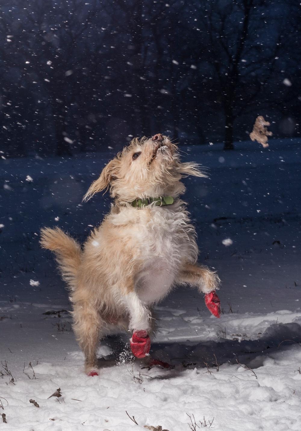 Снимок сделал 15-летний фотограф из Чикаго. Он запечатлел собаку по кличке Пиппин, которую его семья