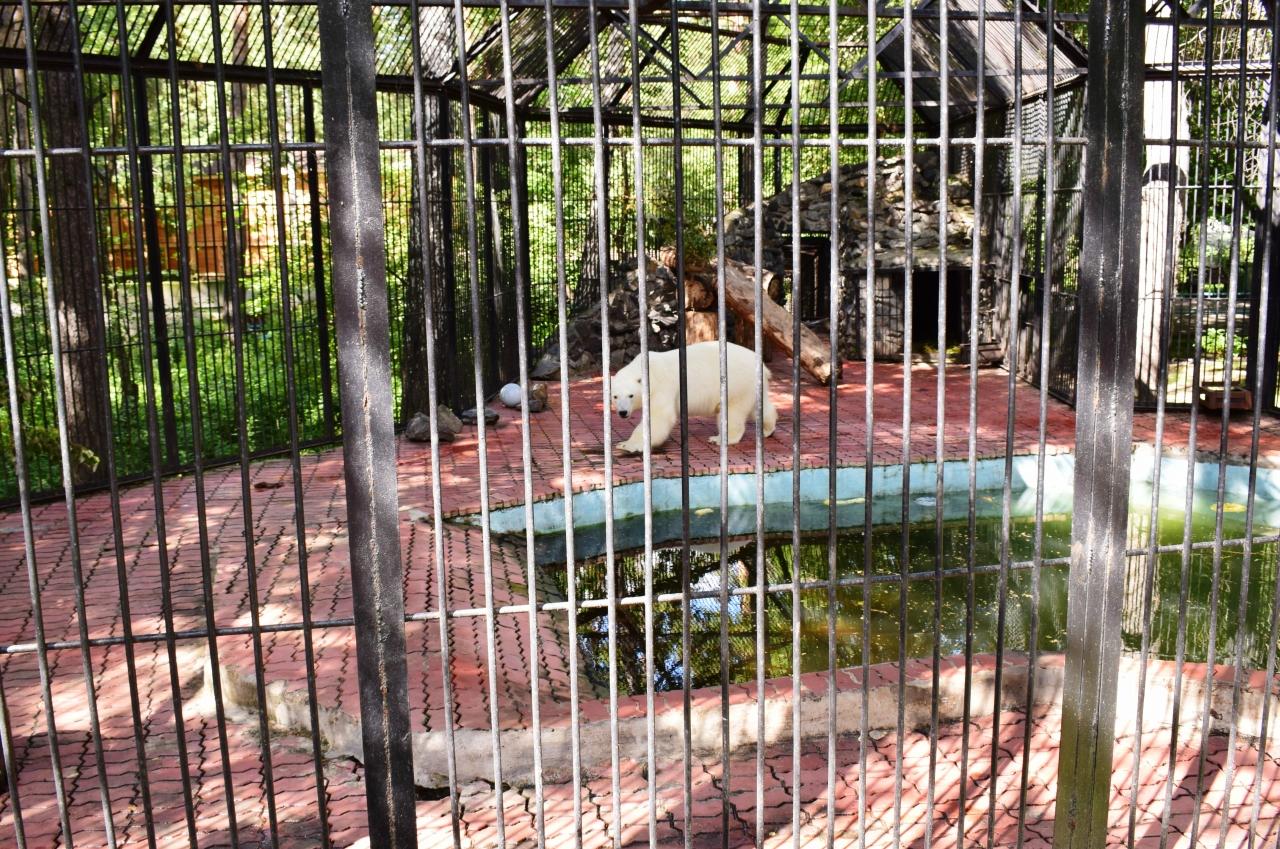 зоопарк новосибирск