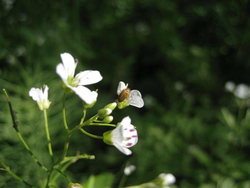 насекомое
