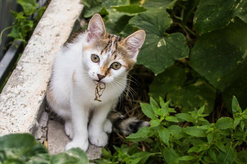 Кошка Черепашка