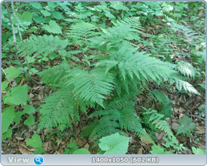 http://img-fotki.yandex.ru/get/229651/44334641.1a/0_18153f_c8a00f46_orig.png