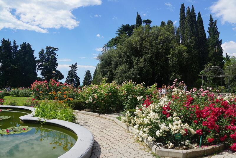 Розарий ботанического сада