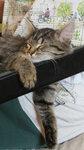кошечка спит