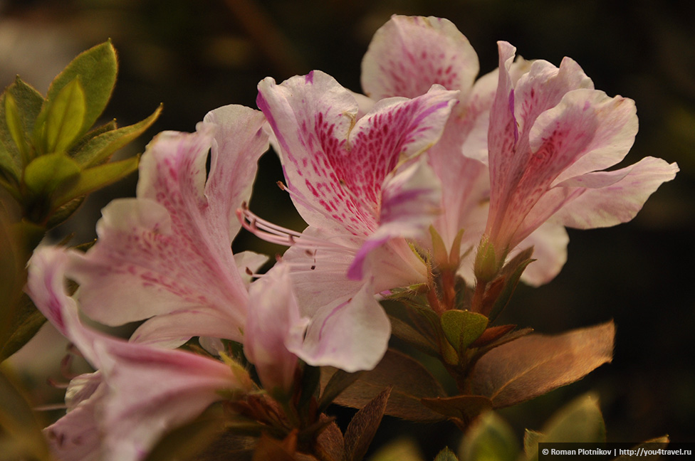 0 1919c2 2e1657db orig День 212 213. Прощай, Колумбия! Ботанический сад в Боготе