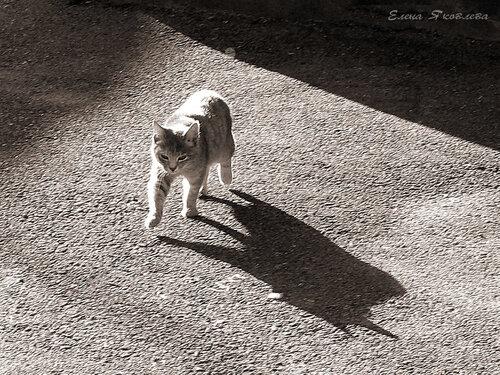котенок и его тень