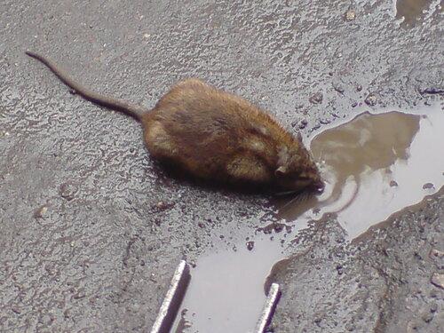 траве-горюн Аленький лениндград элеватор крысы кошки дорогая