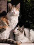 турецкие кошки на зимнем солнце