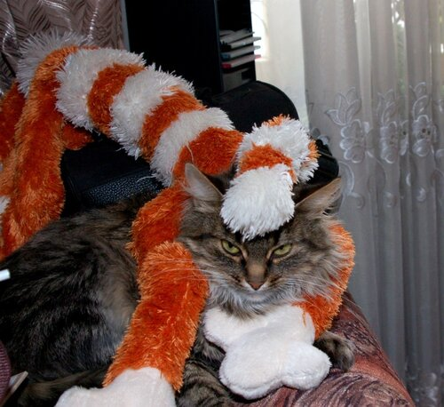 Накрыло котом!
