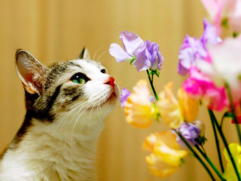 Красивые и профессиональные фото котов 0_12410_158ccadd_XL