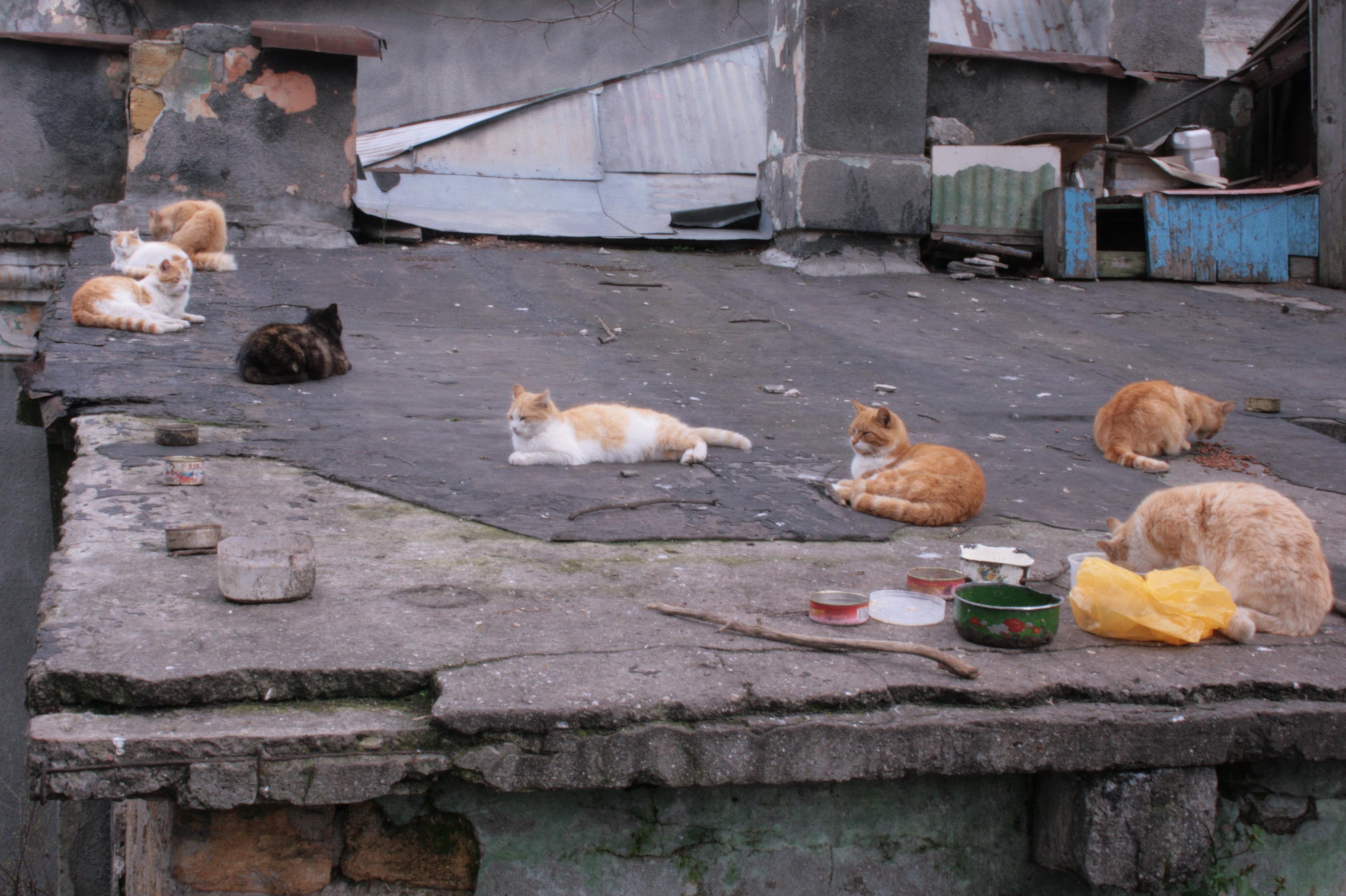 Кошачий базар