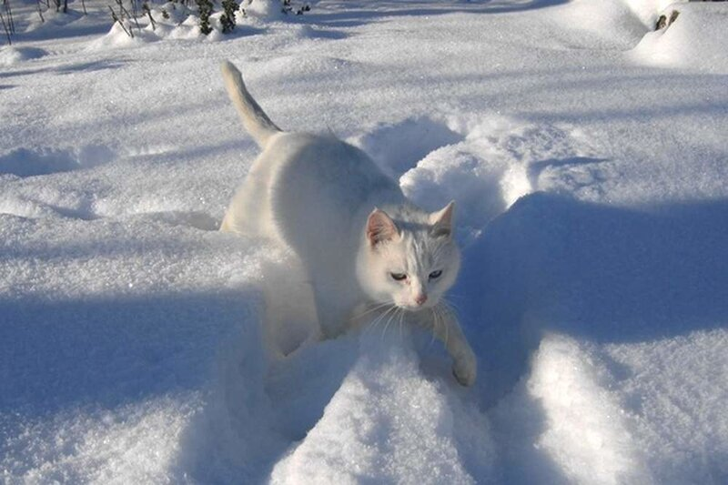 Белая как снег.