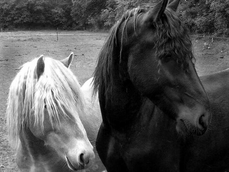Белый Конь Черный