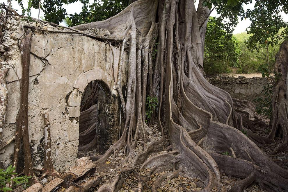 15. Вот так должна выглядеть дорога к дому. Особняк в Луизиане и дубовая аллея. (Фото Tim Graha