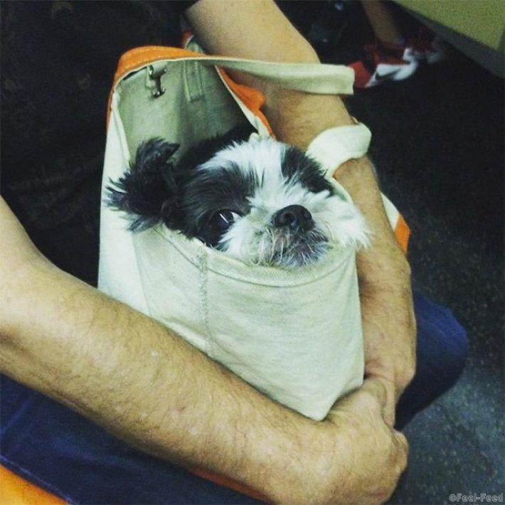Лайфхак оказался рабочим, интересным и популярным, да и сами собаки не прочь прокатиться на руках у