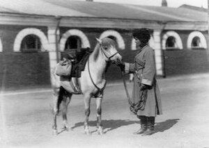 Наездница Кудашева, совершившая конный переход Сибирь-Петербург, со своим конем.