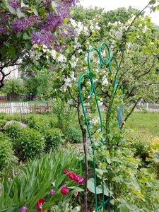 Весна в райском садике