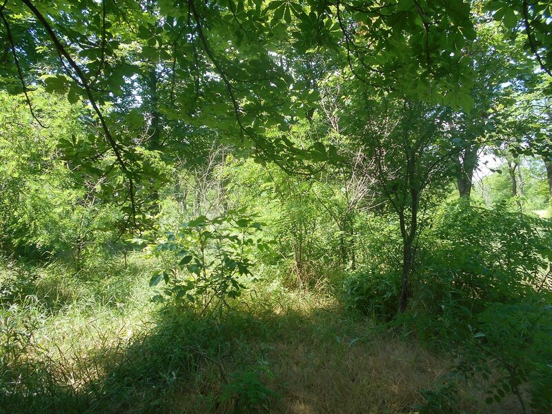 На тропе лесной ... DSCN2544.JPG