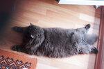 Мой кот - коврик