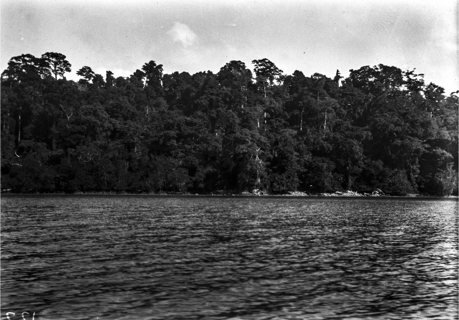 1257. Прибрежная растительность острова Лонг