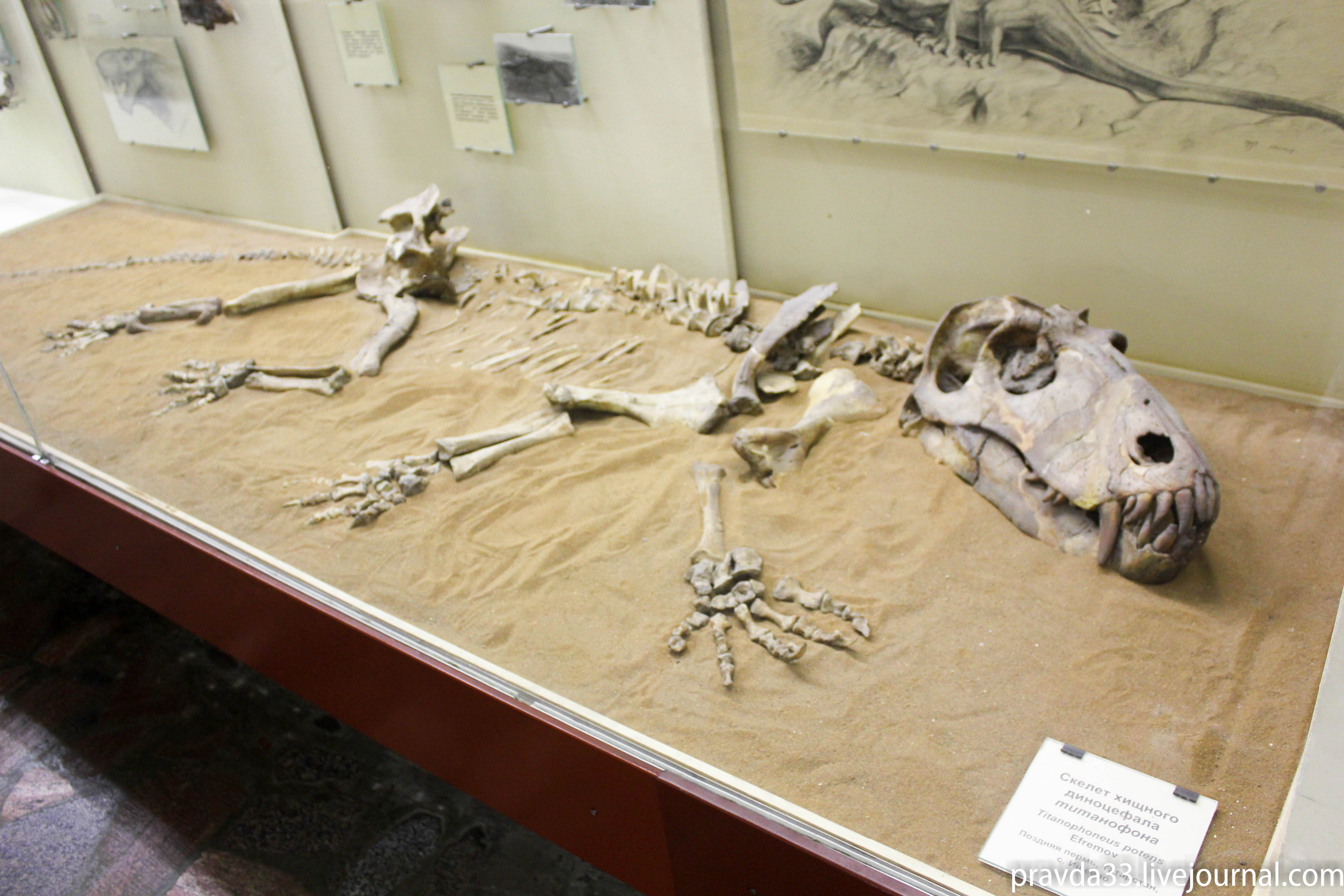 Музей палеонтологии-15.jpg