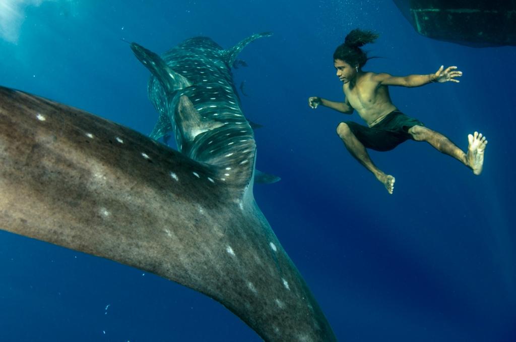 Китовые акулы