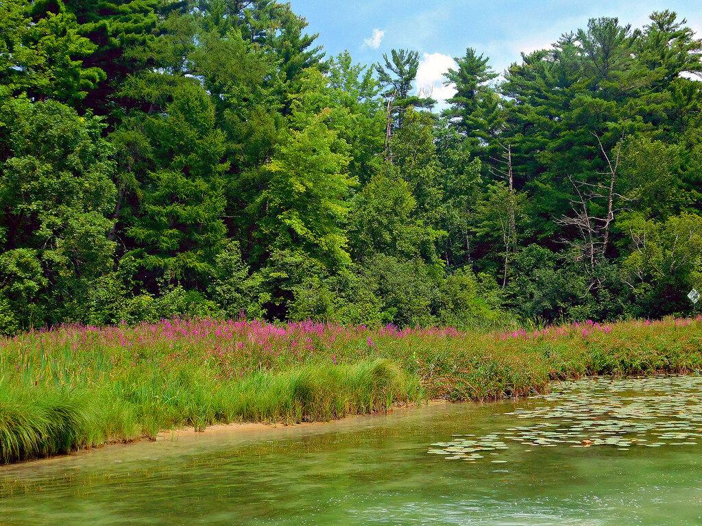 Уточки на озере Тэйлор