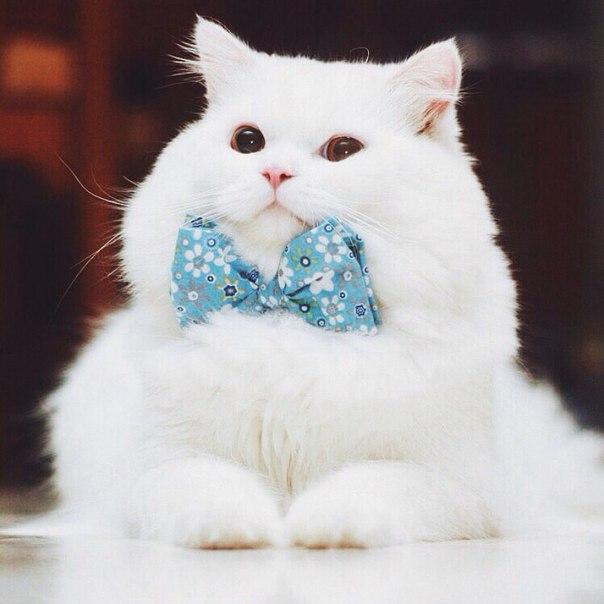 кошки-кошки-15.jpg