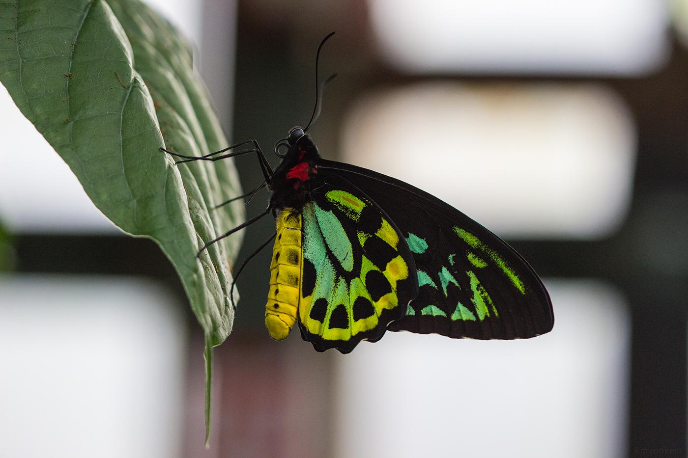 Butterflies / фото Kelly Yonkers